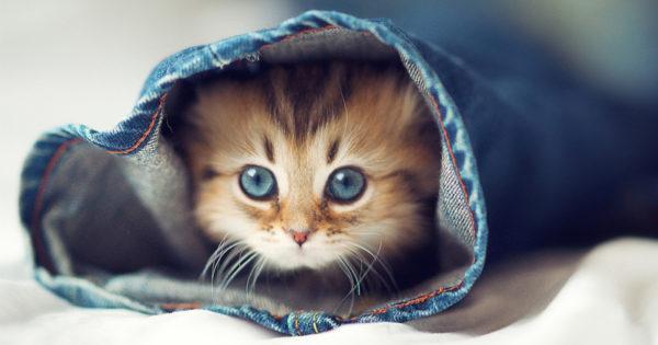 Iubiti pisicile? Iata cateva curiozitati despre ele!