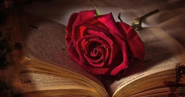 Daca iubirea te face sa suferi, inseamna ca nu ai cunoscut iubirea adevarata