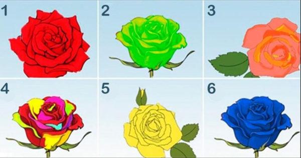 Test de personalitate: Alege trandafirul care crezi că înfățișează sufletul tău și află ce vrea să-ți spună