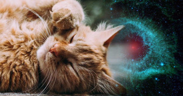 Cum determină o pisică prezența energiilor negative din casa ta
