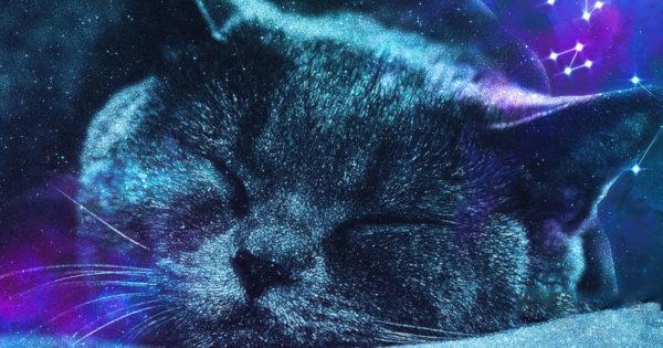 Pisicile au fost recunoscute oficial ca animale vindecătoare