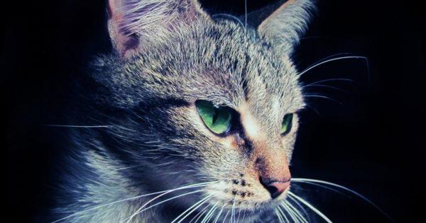 Beneficii pe care le aduce o pisică casei și stăpânului. 6 motive pentru a ține o pisică pe lângă casa ta