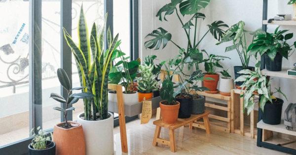 Top 15 plante pentru purificarea aerului din casă conform NASA