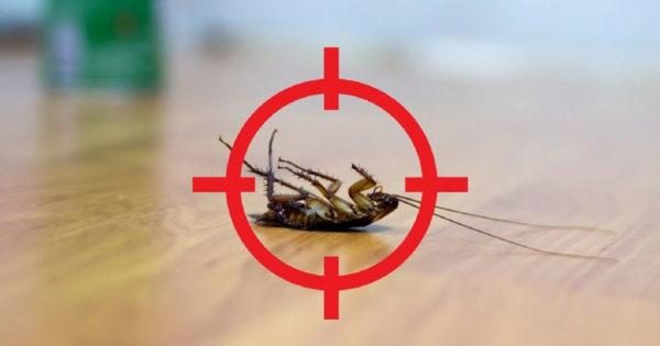 6 remedii și rețete eficiente pentru dăunătorii casnici: fără substanțe chimice!