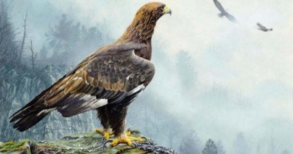Metoda prin care o femelă vultur alege un tată pentru copii ei