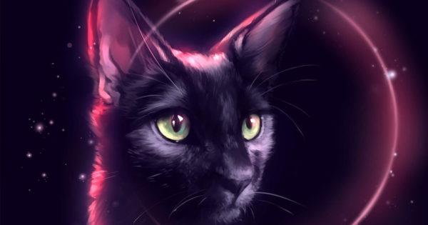 Pisica neagră în casă: 12 superstiții