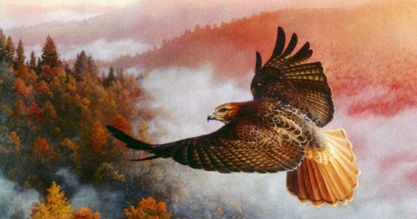 O pildă Zen despre un șoim care nu putea zbura