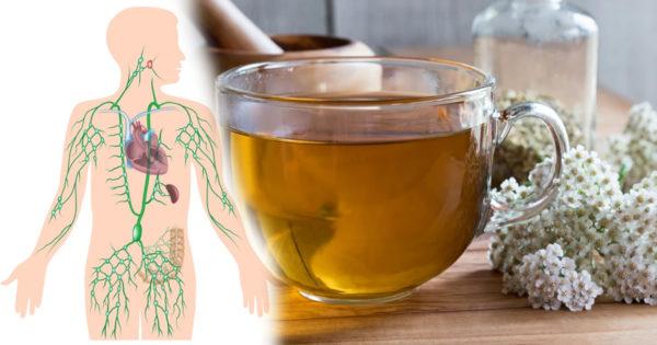 Beneficiile ceaiului de coada șoricelului pentru inimă și imunitate