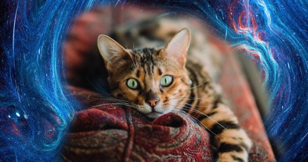 Pisicile empatizează cu voi și vă pot vindeca mintea, corpul și sufletul.
