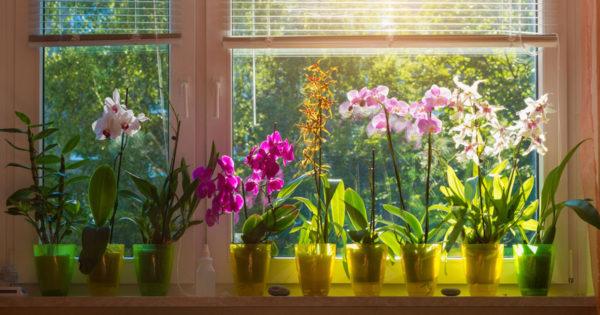 Florile de interior care ajută femeile să atragă dragostea și să găsească fericirea
