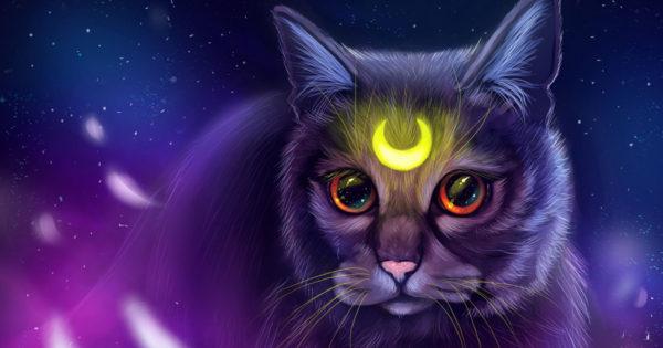 De ce este bine să ai o pisică în casă – puterea pisicilor