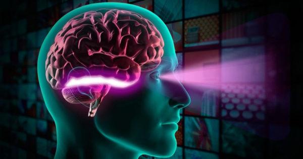 Ce își dorește creierul tău să-i oferi sau cum să îmbunătățești funcția creierului
