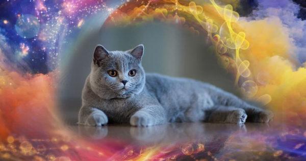 Energia pisicilor cenușii: de ce probleme vă pot proteja acestea