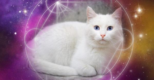Energia pisicilor albe: care este protecția lor principală pentru casă și stăpân